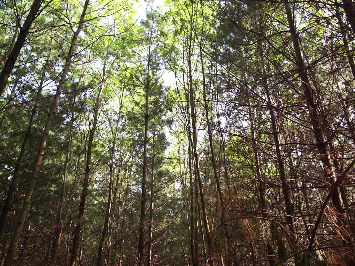 Hsbc_forest_claireville_conservation_area